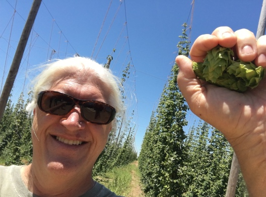 Steve Altimari, president and brewer of High Water Brewing, harvesting hops -photo courtesy of High Water Brewing